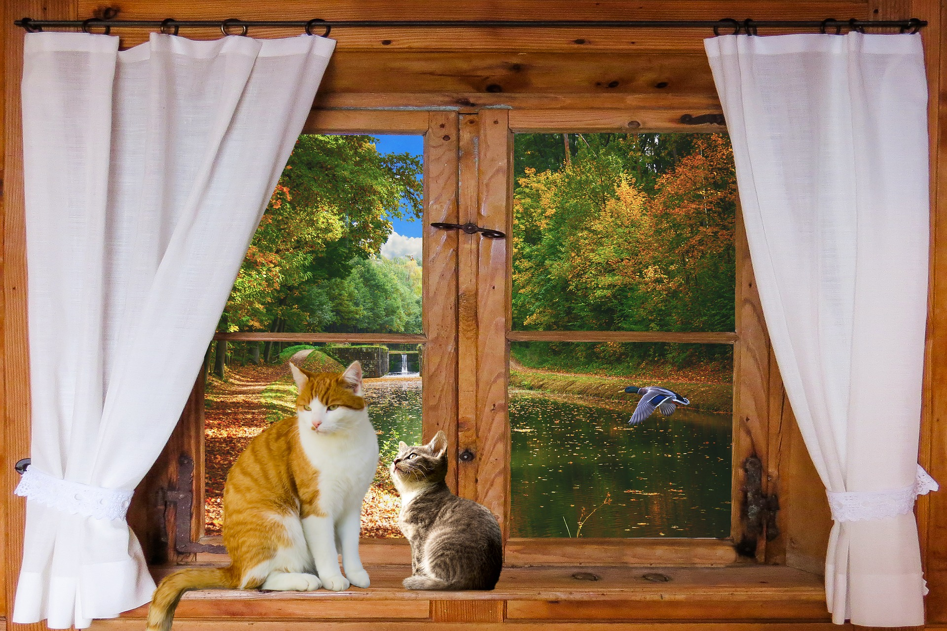 Cat and kitten on a windowsill with a lake and a duck flying outside